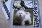 HAND MADE HAPPY BIRTHDAY KEEPSAKE CARD BOXED WITH BICHON FRISE & WHITE ROSES